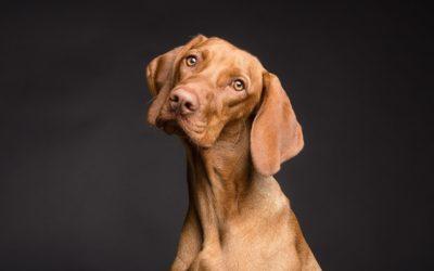 Диагностика и лечение демодекоза у собак, причины неправильного диагноза