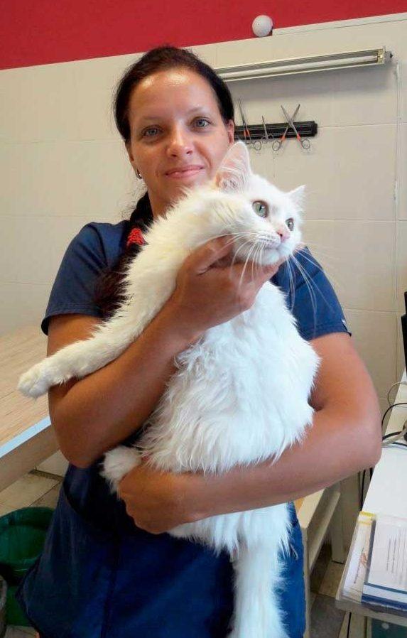 Практикующий ветеринарный терапевт, дерматолог, эндокринолог