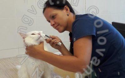 Помощь в дерматологии кошек исобак